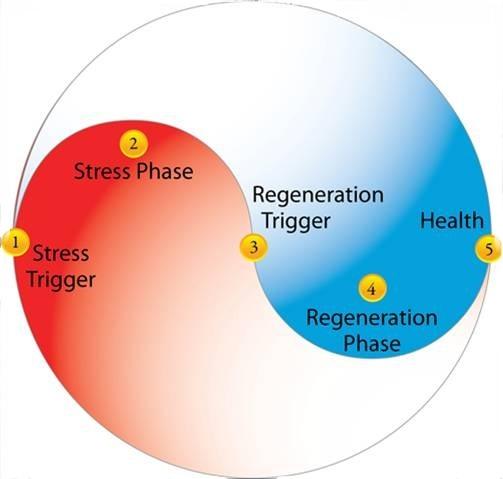 Meta Health 2phases11